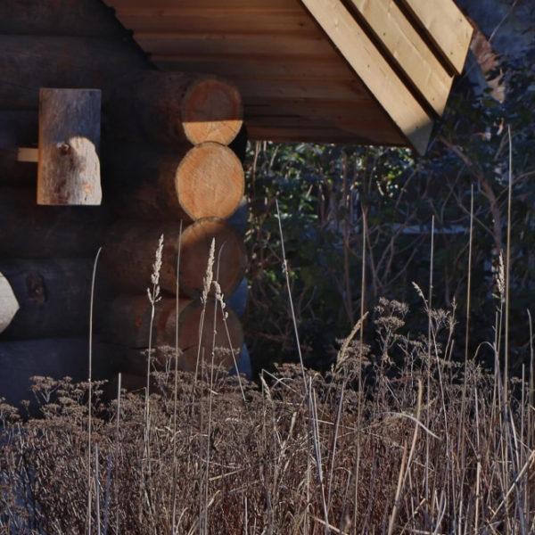 Schilf und Gräser vor einer hölzernen Blockhütte